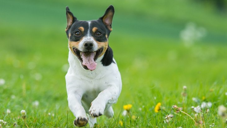 なぜ犬の寿命は年々延びているのか?