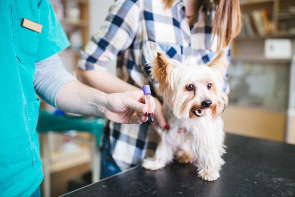 犬のCRPが高い!下がらない原因や病気、基準値まで