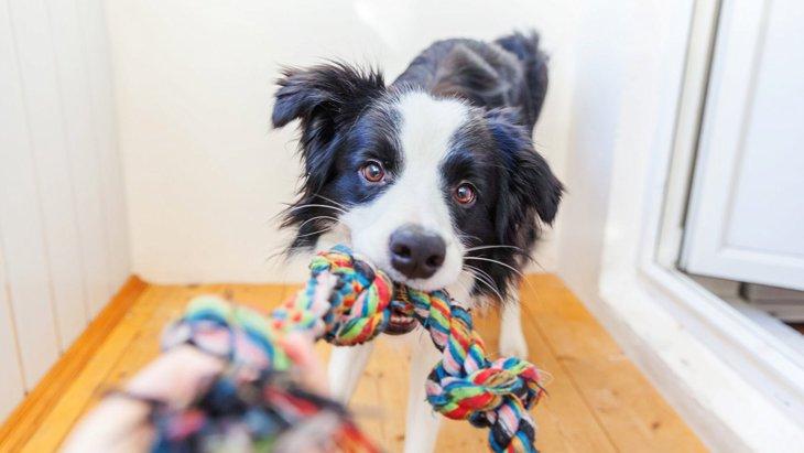 なぜ?犬が『おもちゃ』に唸っている時の心理4選