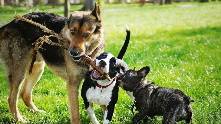 超危険!犬だけで遊ばせると起きるかもしれない事故5つ