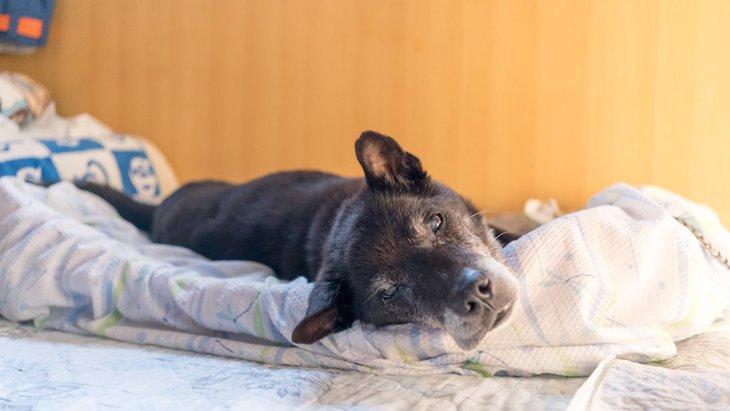 犬が夏に太ってしまう理由と対処法