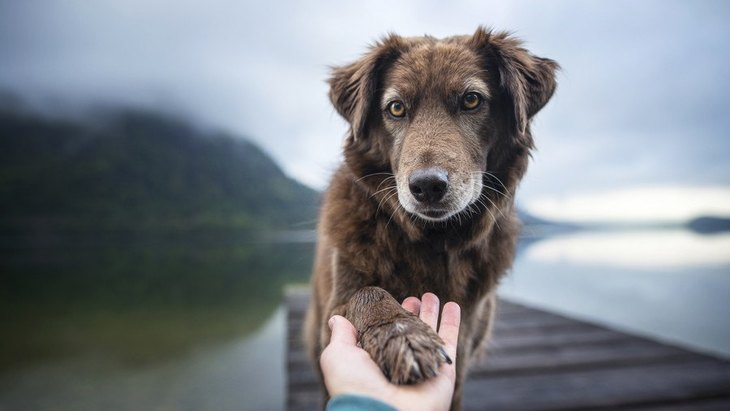 一人暮らしの飼い主が亡くなったら犬はどうなる?愛犬のために備えておくべき4つのこと