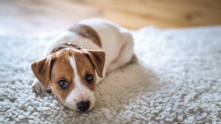愛犬のお留守番中に停電した際の危険性とは?