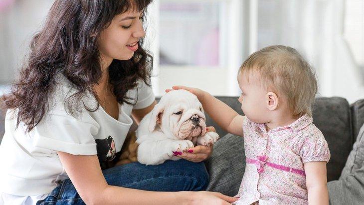 犬のしつけと人間の子供のしつけの共通点