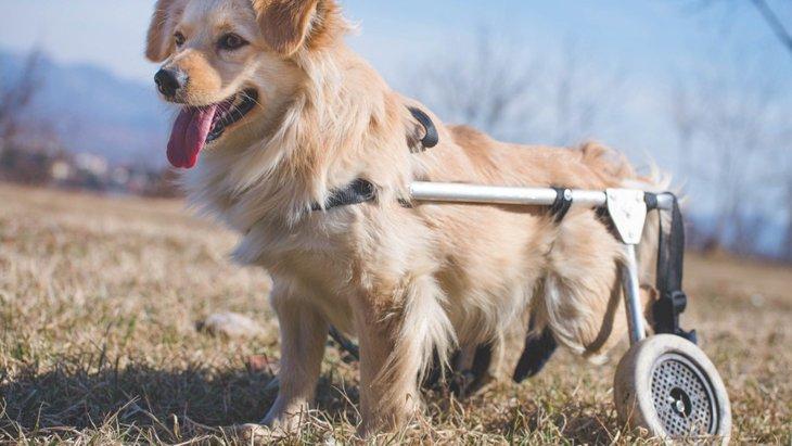 足が不自由な犬を飼う際の注意点と付き合い方