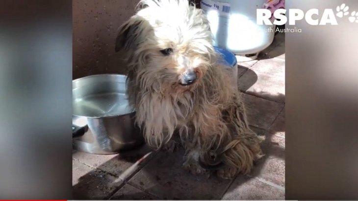 捨てられて餓死寸前…茂みで震えていた小型犬のビフォーアフターが凄い!