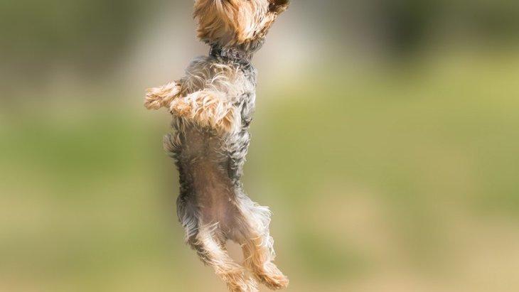 実は危ない?犬の「ジャンプ」の危険性とやめさせる方法