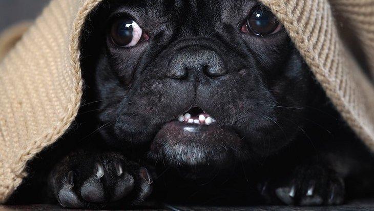 愛犬が臆病な性格になる生活習慣4つ