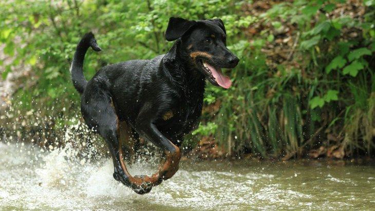 犬にとっては危険?海や川に潜む6つのこと