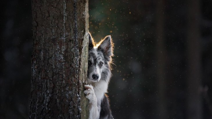 犬が『人見知り』をしている時にしている仕草や態度5選