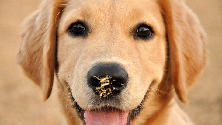 愛犬が「ホリホリ」する4つの理由や心理とは