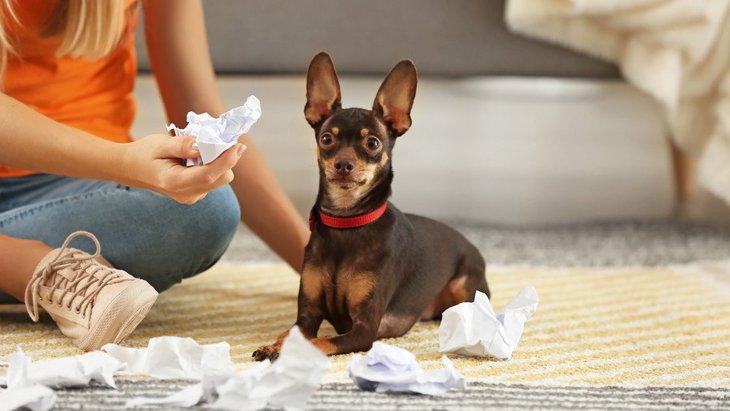 犬がいたずらをしていたときに飼い主がやってはいけないNG行為3選