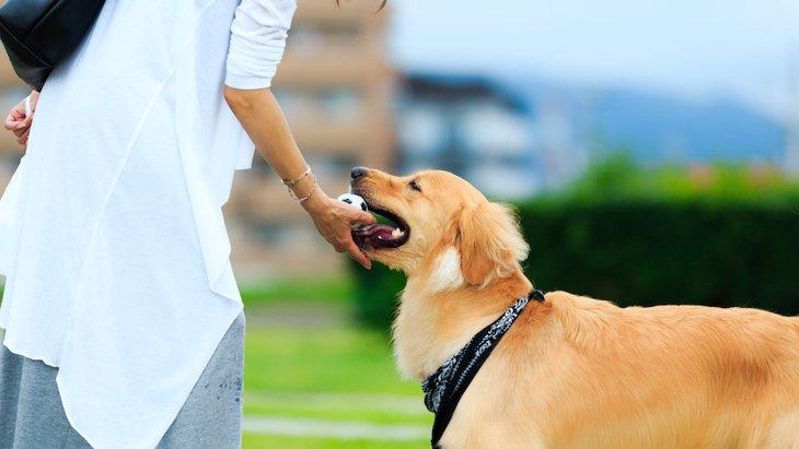 犬にボールを使って「放せ」「出せ」を教えるやり方