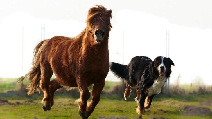 犬の牧場おすすめ5選!アクセスや利用方法、注意点について
