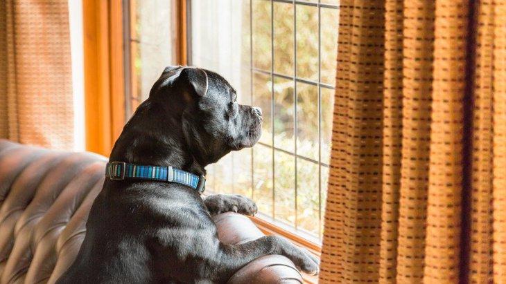 犬が「好きな音」「嫌いな音」それぞれの特徴とは?