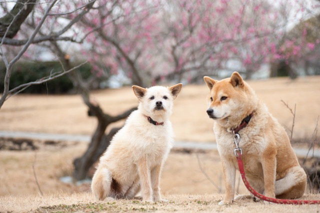犬同士で「いじめ」が起こる原因と対策