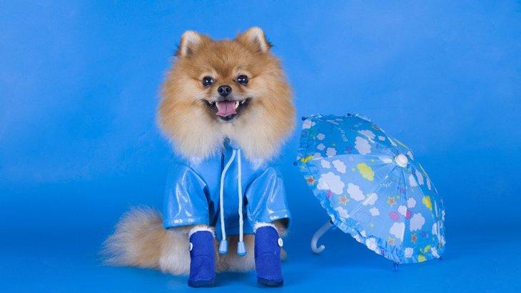 犬が梅雨の時期によくかかる病気3選