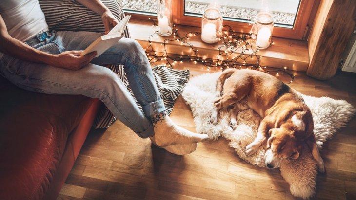 犬が『飼い主のことが嫌な時』に見せる4つのサイン