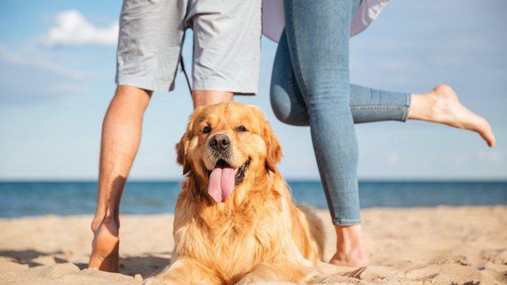デートアプリのプロフィール写真に愛犬を入れると成功率がアップする?