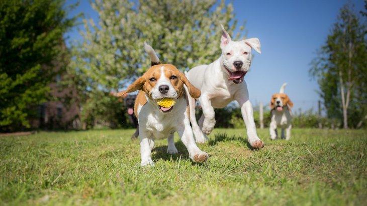 犬が他の犬を遊びに誘っている時にする仕草や行動5つ