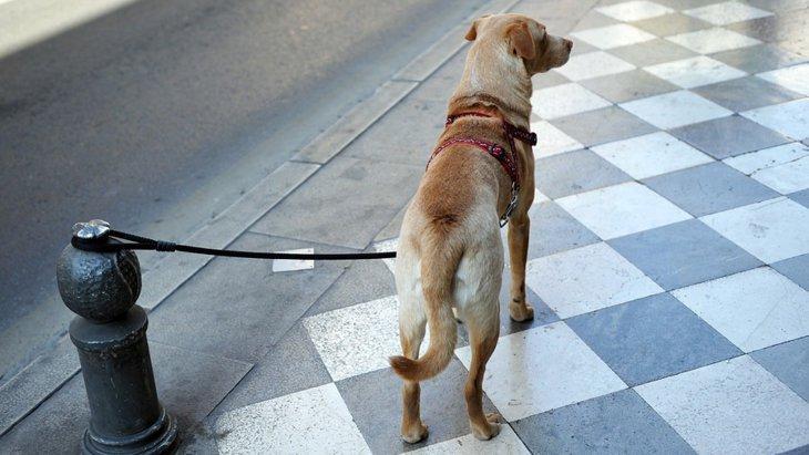 犬を店の外に繋ぐリスクを考える