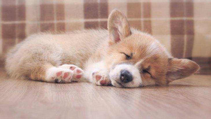 犬が『怪我』をしている時に見せるサイン5つ
