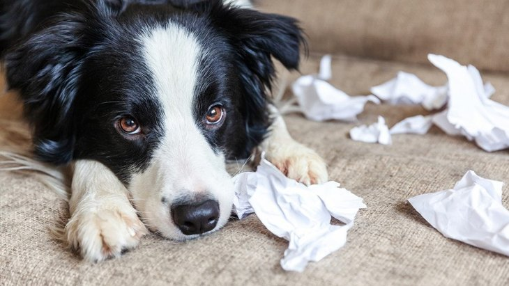 犬が『怒られるのを察している時』によくする行動7選