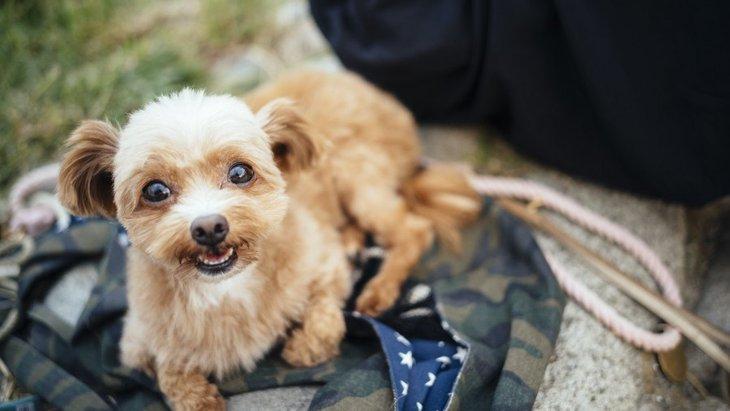 犬は人の言葉が分かる?話しかけを理解していると感じる時4つ