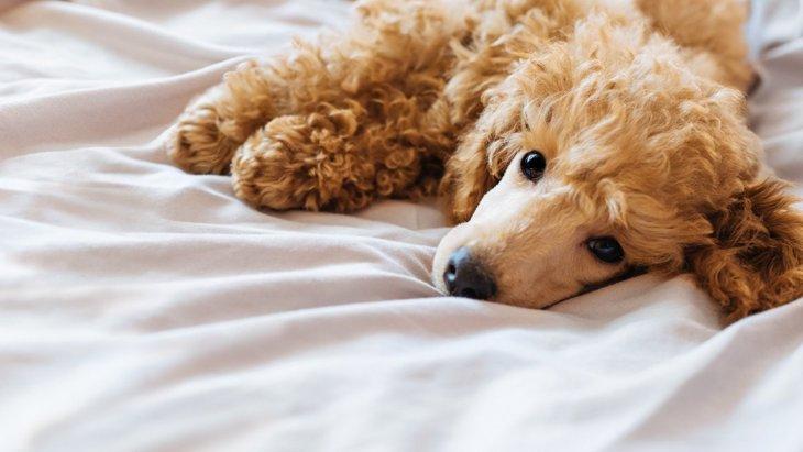 犬の『逆くしゃみ』は放っておいて大丈夫?危険な症状2つ