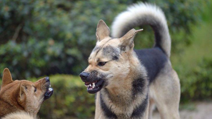犬同士がケンカをしやすい場面と気をつけたい怪我