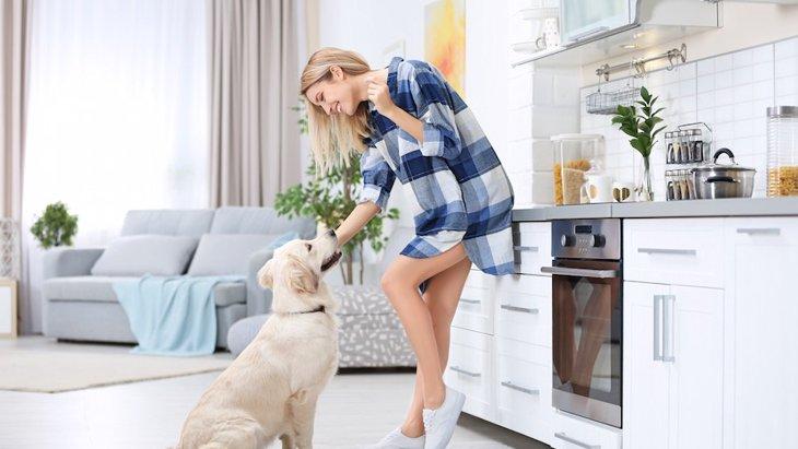 犬はカニカマを食べても大丈夫?注意すべき調味料とアレルギー症状