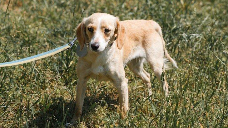オドオド…。犬が恐怖を感じている時の仕草や行動6選
