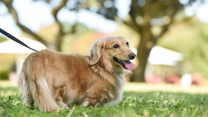 愛犬の『お散歩中の引っ張り癖』を改善する方法3選
