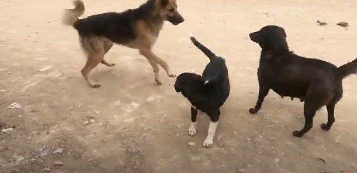 子犬を守る野良犬の姿に感動!愛されパピーの日常