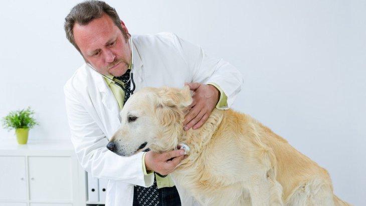 犬の胸水(膿胸)とは?原因や症状、治療法から予防法まで