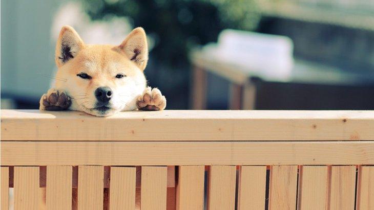 犬が反省してる時に見せる4つの仕草