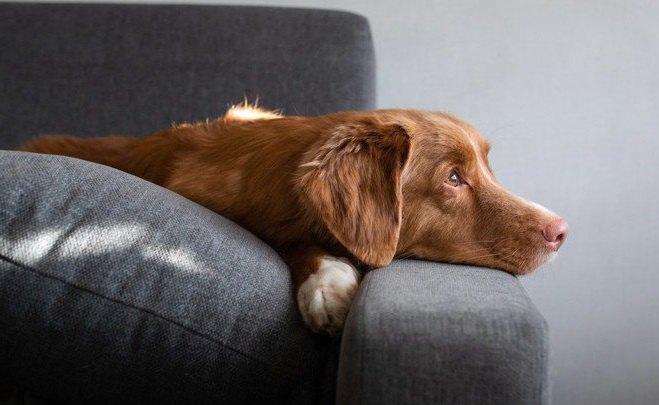 犬が飼い主のことを『鬱陶しい』と感じている時の仕草5つ