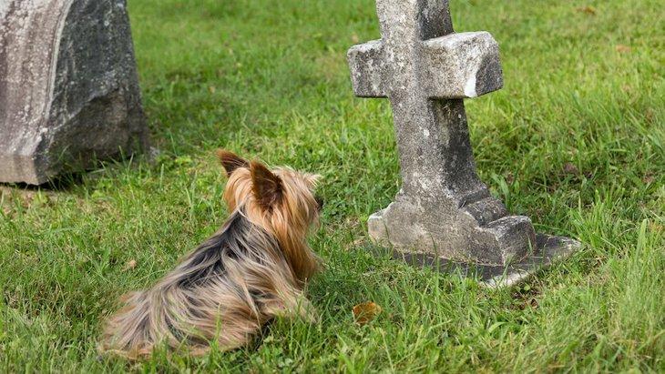 犬は『飼い主の死』を理解できるのか?