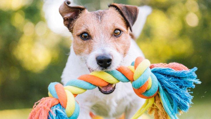 犬が喜ぶ『手作りおもちゃ』3選!捨てる洋服などから簡単手作り