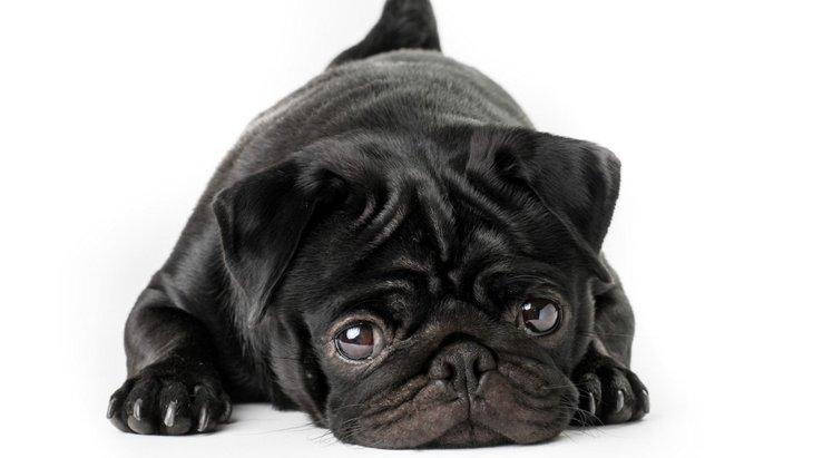 犬の皮膚が黒い原因と考えられる病気