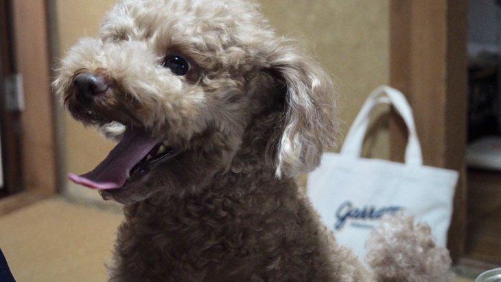 犬との暮らしでやりがちな5つのNG行為