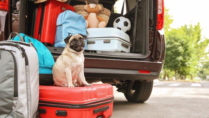 犬を長距離移動させるリスク