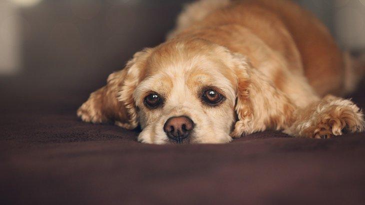 【実はしっかりできていないことが多い】愛犬のブラッシングの落とし穴
