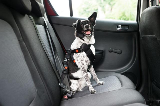 日本でも考えたい!車中の犬の安全対策、アメリカでのアンケート調査