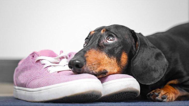 なぜ?犬が『靴』を好む理由3つ
