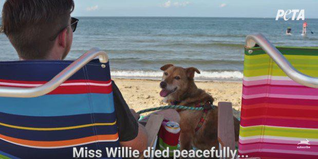 鎖の長さの範囲が犬の全世界だった。救助、余命宣告…そして凝縮された日々