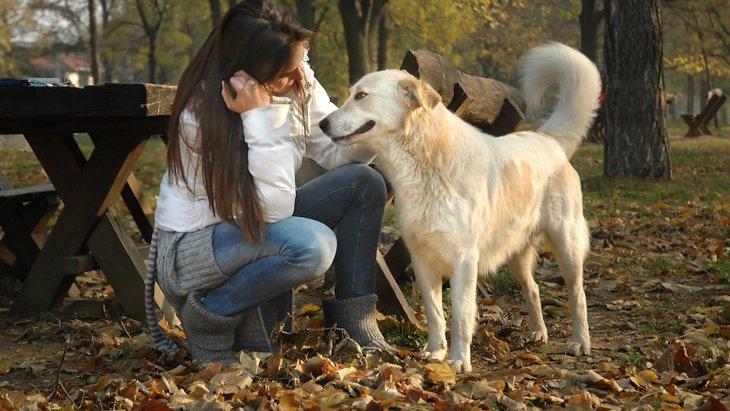 犬に好かれる方法やコツ5選!すぐに仲良しになれる可能性も?