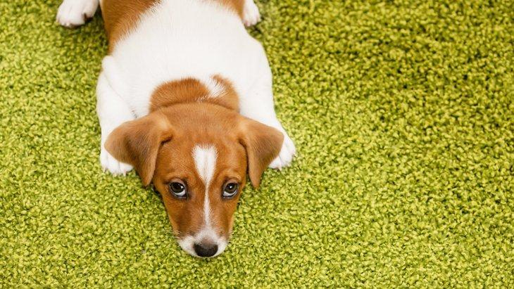 """【""""怒る""""と""""叱る""""は別物】愛犬をしつけるときに怒ってはいけない4つの理由"""