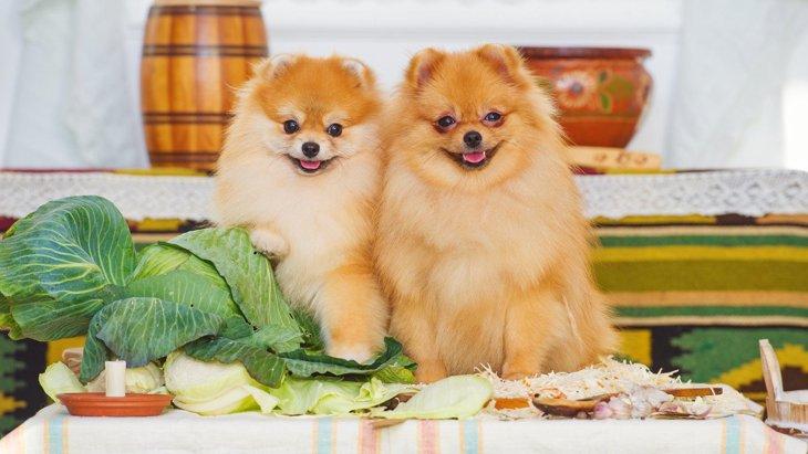 犬が『満腹』の時に見せる仕草や行動3選!どのくらいの量を与えるべきなの?