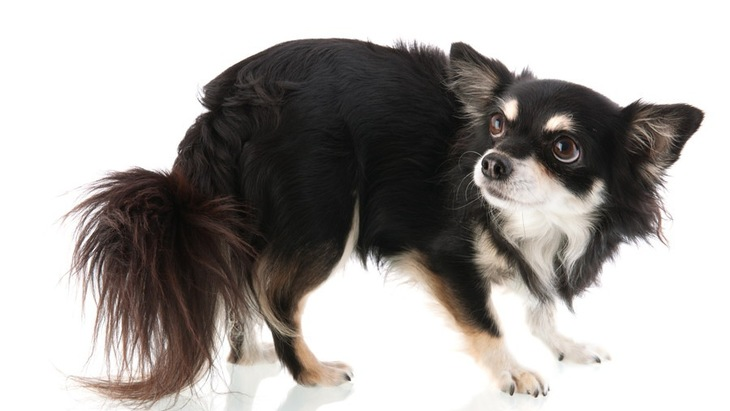 人間の手を怖がる犬への接し方とリハビリの方法